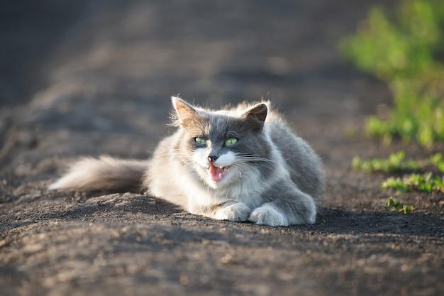 Grey cat lying on the ground