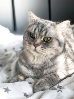 Grey cat lying on light bed