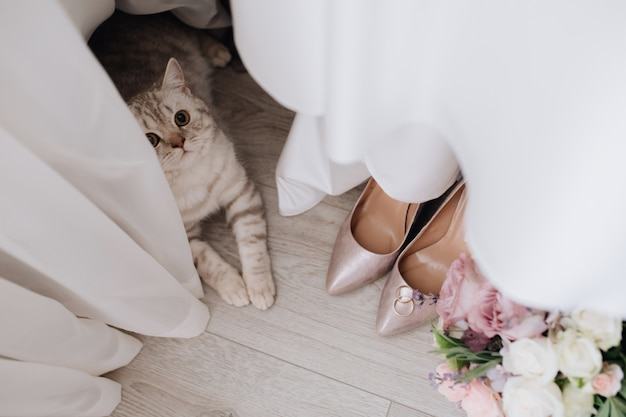 Grey cat near curtains, wedding rings, bouquet and shoes on the floor