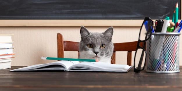 Grey cat sits at a table with books and notebooks, studying at home.