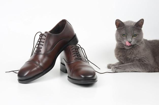 白い背景の上の古典的な茶色のオックスフォード靴の隣に座っている灰色の猫