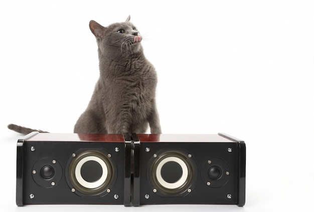 Grey cat sitting with two stereo audio speakers on white backgro