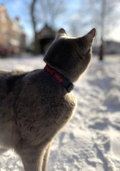 Серая кошка гуляет по снегу зимой в амстердаме