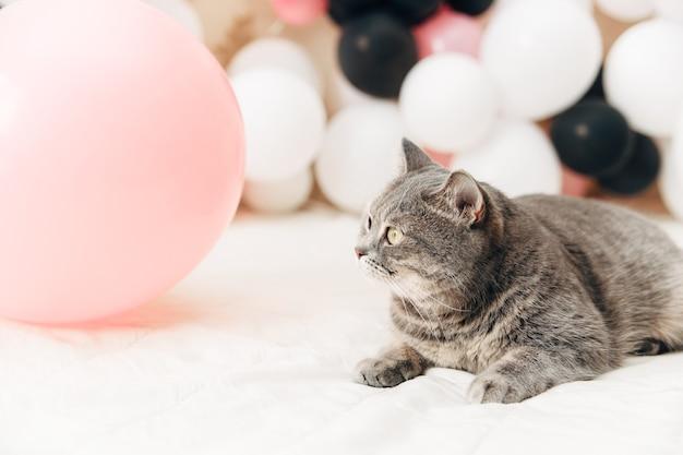 Серый милый кот. воздушный шар фон. концепция дня рождения.