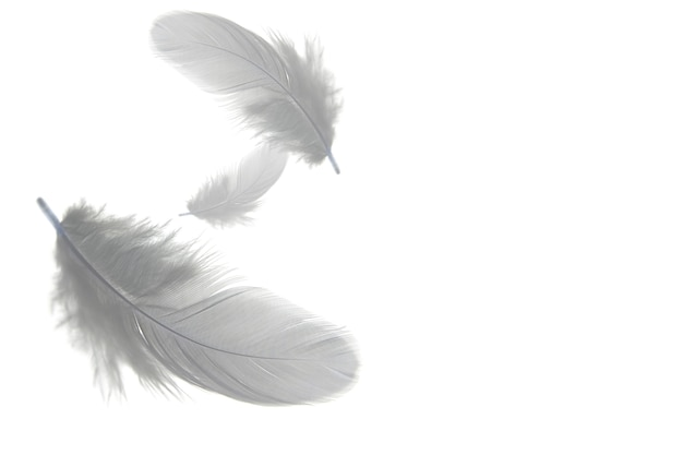 Grey feathers float in the air, isolated on white background.