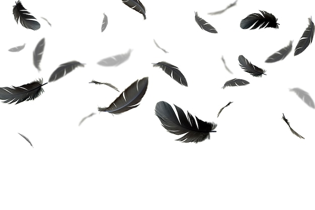 Grey feathers floating in the air. isolated on white background.