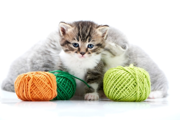 Grey fluffy cute kitties and one brown striped kitten are playing with orange and green ya