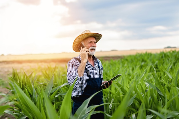 Grey haired beard senior agronomist inspecting corn field, talking on phone and using tablet computer.