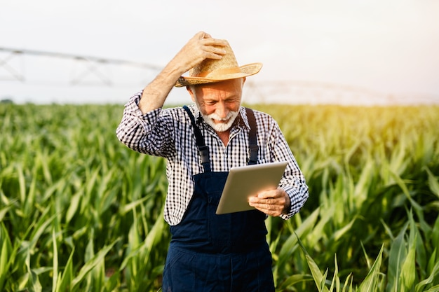 Grey haired beard senior agronomist inspecting corn field and using tablet computer.