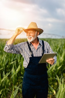 Grey haired beardes senior agronomist inspecting corn field and using tablet computer.