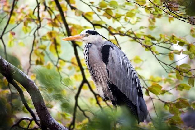 木の上の灰色のサギの鳥
