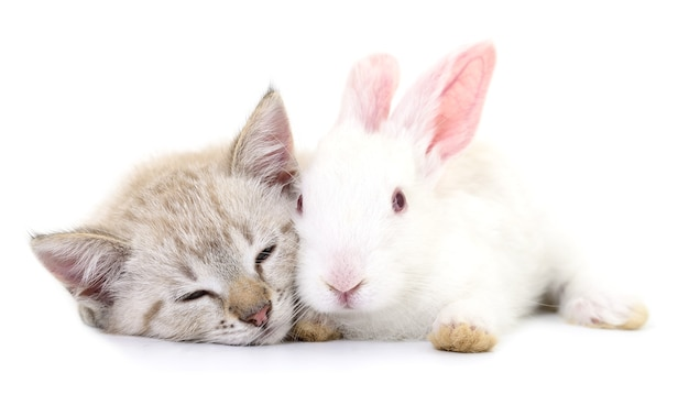 Серый котенок играет с белым кроликом на белом фоне.