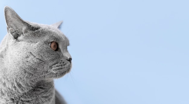 그녀의 뒤에 단색 벽과 회색 키티