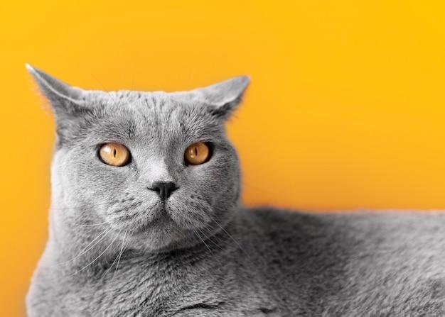 Gattino grigio con parete monocromatica dietro di lei