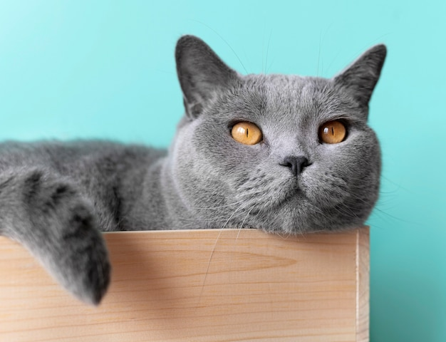 Grey kitty with monochrome wall behind her