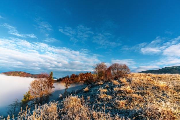 산 언덕에 다채로운 나무로 덮인 회색 안개