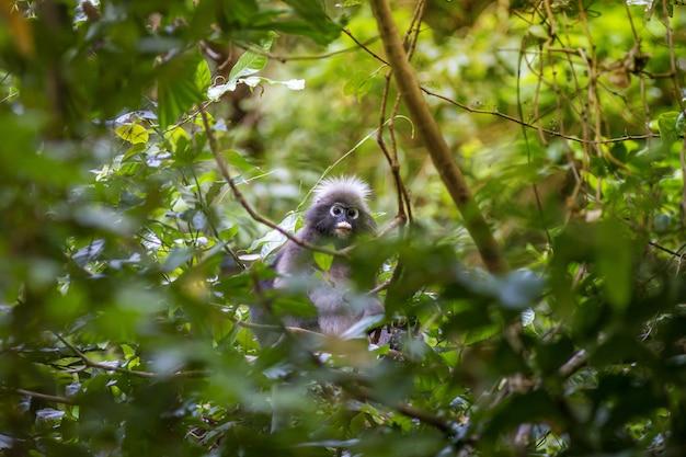 Grey monkey sitting on tree branch
