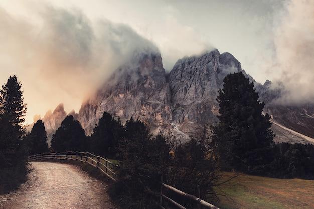 木の近くの灰色の山