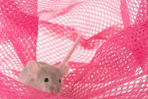 Серая мышь в рыболовной сети