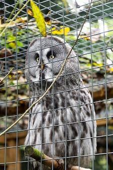 動物園で灰色のフクロウ