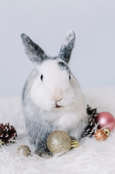 Grey rabbit with shiny baubles