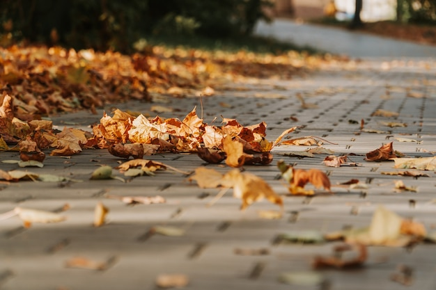 Серая каменная мостовая. брусчатка с желтыми осенними листьями