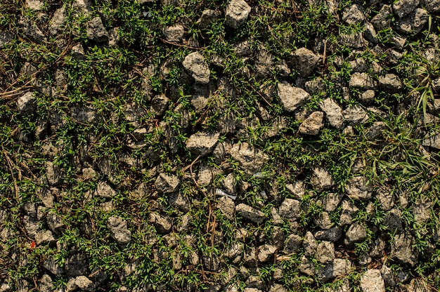 Grey stones among the green grass in the wild nature