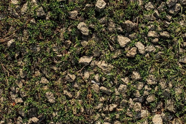 野生の自然の緑の草の中で灰色の石