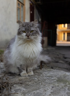 Grey street cat sits on the ground