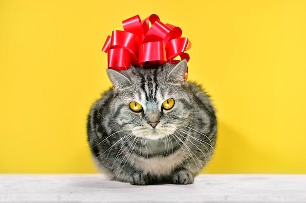 노란색 바탕에 앉아 머리에 큰 붉은 활과 회색 줄무늬 영국 고양이. 재미있는 고양이 초상화와 선물 카드입니다.