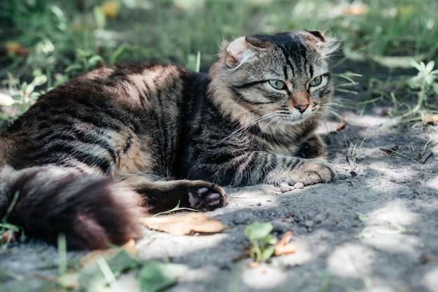 Серый полосатый кот дремлет на зеленой траве