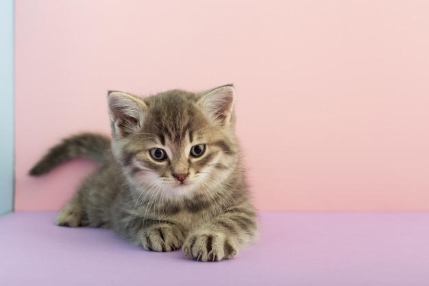 Серый полосатый котенок играет. маленький милый полосатый пушистый кот.