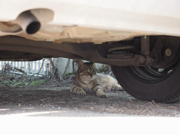 Серый полосатый кот животное