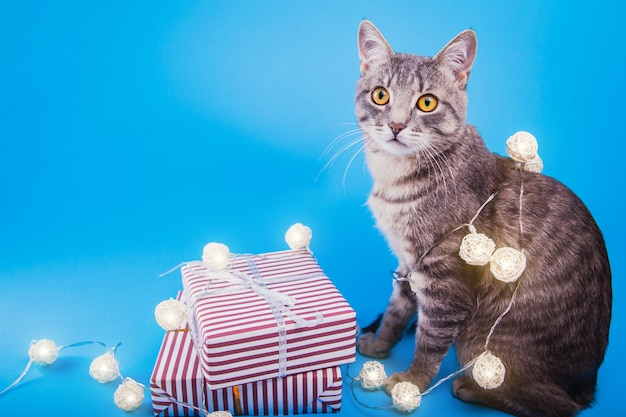 Grey tabby cat sitting by gift boxes covered with lights.