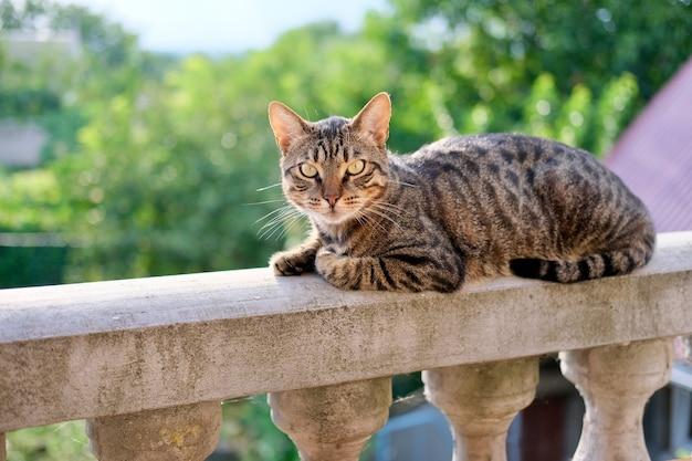 녹색 햇살이 비치는 야외 테라스의 발코니 난간에 앉아 있는 회색 얼룩 고양이