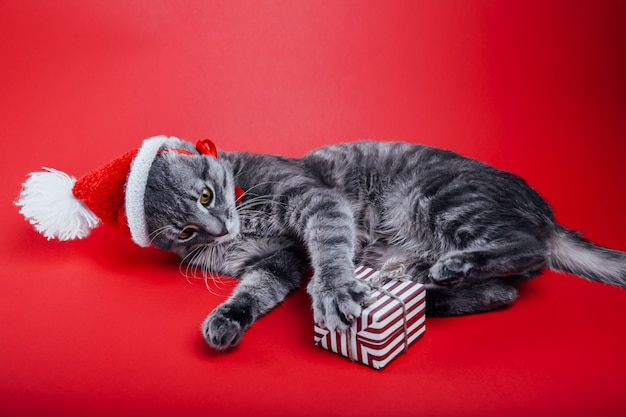Grey tabby cat wears santa's hat on red background and plays with a gift box.