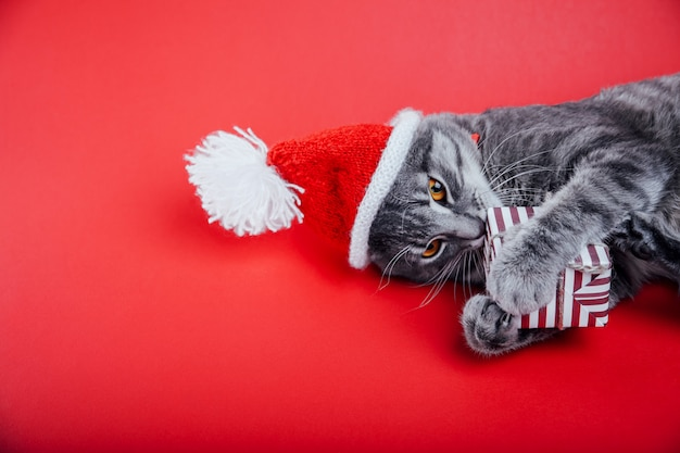 Grey tabby cat wears santa's hat on red and plays with a gift box.