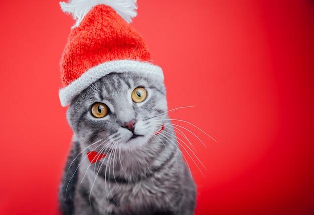 Grey tabby cat wears santa's hat on red