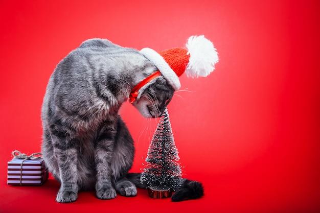 Grey tabby cat wears santa's hat on red.