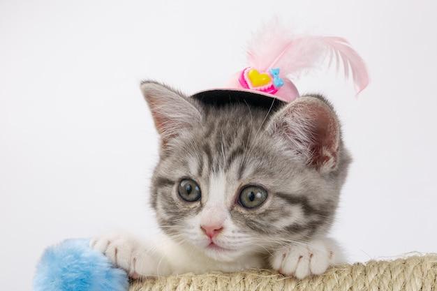 깃털 장식 모자에 줄무늬 스코틀랜드 고양이 회색.