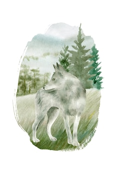 白い背景で隔離の灰色のオオカミ水彩画。