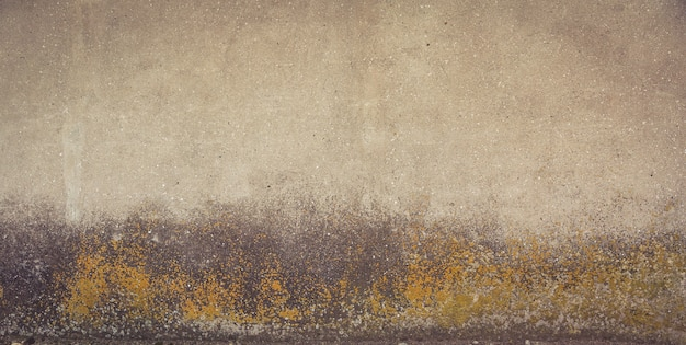 Grey and yellow grunge concrete wall with mold on it.