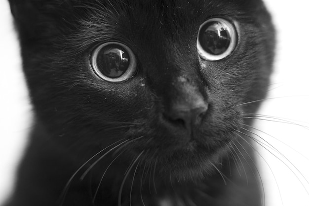 Greyscale closeup shot of a black cat with cute eyes