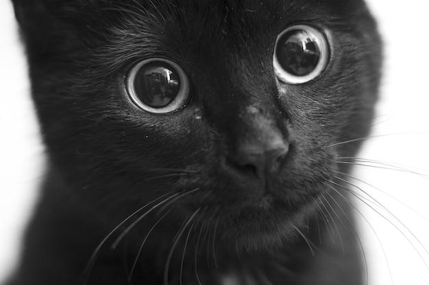 귀여운 눈을 가진 검은 고양이의 회색조 근접 촬영 샷