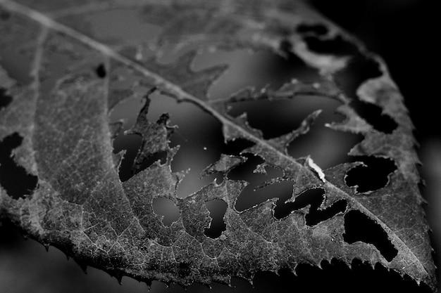 표면에 무늬가있는 구멍이있는 회색조 잎