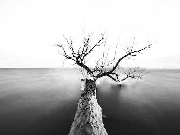 日光の下で海に裸の枝を持つ木のグレースケール