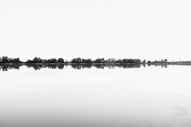 물에 반사되는 다양한 나무의 그레이 스케일 촬영