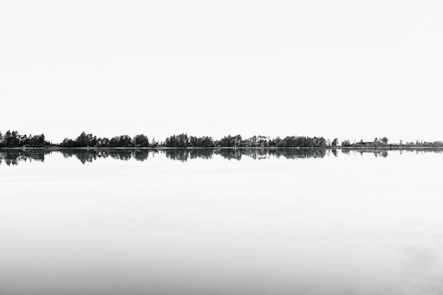 Greyscale shoot of a range of trees reflecting in the water