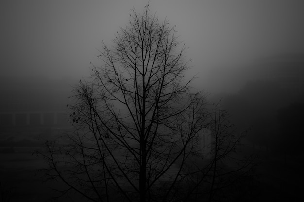 Greyscale shot of a bare tree in a park covered with fog
