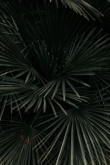 Оттенки серого из красивых листьев пальмы